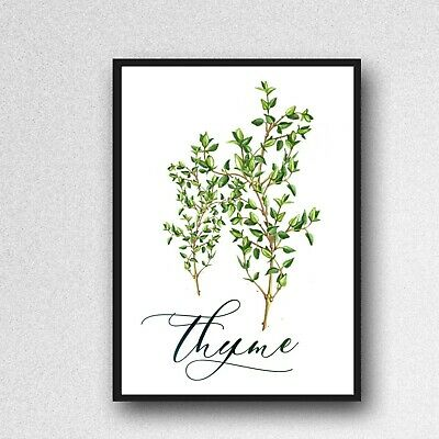 thyme herb print PICTURE kitchen plant WALL ART A4 unframed poster gloss