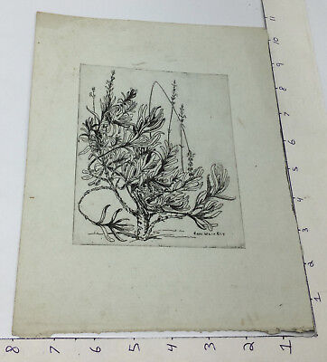 Vintage early Etching -- CARO WEIR ELY -- PLANT w watermark on paper 1900's #2