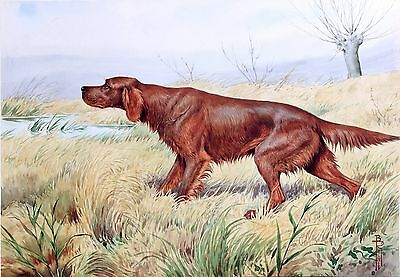 "Irish Setter, Hunting dog, antique wall deco, 20""x14"" Art Print"