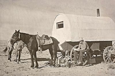 OLD WEST WYOMING COWBOY VINTAGE PHOTO DRIVING CATTLE Reprint Photo Pic A162