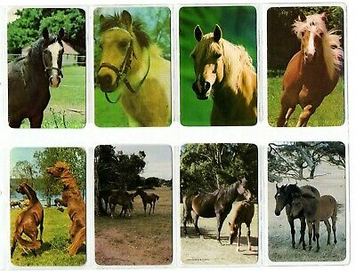 8 HORSE HORSES Blank Back Swap Playing Cards