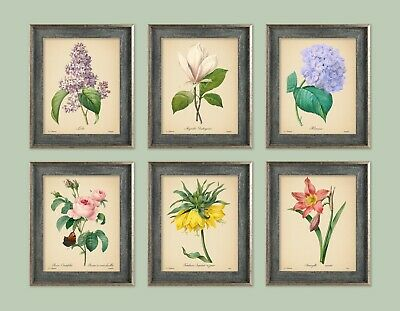 6 VINTAGE FLOWER PRINTS SET 8x10 inch Botanical A4 Art Print Poster Rose Plant