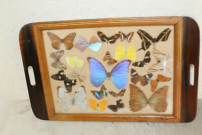 """Vintage Art Deco Butterfly Wing & Wood Inlay Tray 20"""" x 13"""""""
