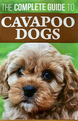 The Complete Guide To Cavapoo Dogs