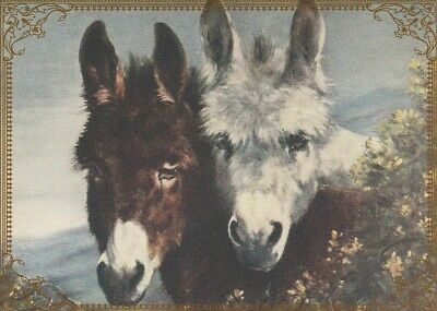 Modern Wide Donkeys P12 Donkeys With Long Hair Swap Playing Card