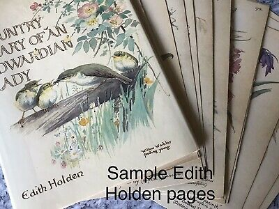 Vintage Book Page Genuine Edith Holden For Junk Journal Paper Craft Collage Tags