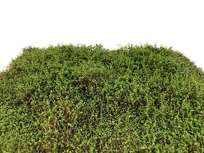 Martin Welberg SEM Moss Green High Bushes Thicket Model Ground Cover Scenery HO
