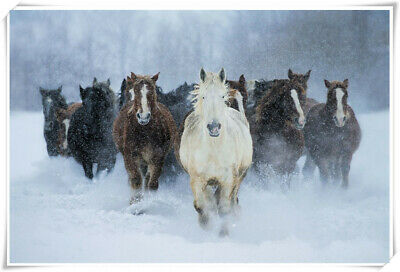 Poster Wall Art Printing Thin Silk Fabric - Horse Snow Animal 32 x 24 Inch