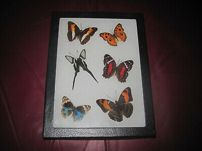 """6 real mounted butterflies framed 6x8"""" riker  mount collection #small 10"""