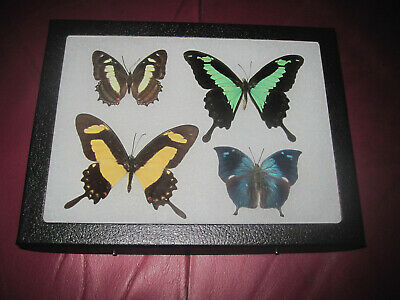 """4 real mounted butterflies framed 6x8"""" riker  mount collection #misc 11"""