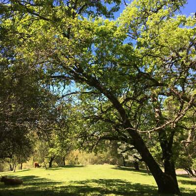 Gorgeous 6.5 Acre Dream Ranch Horse Or Cattle Land In Auburn Ca. Foothills!