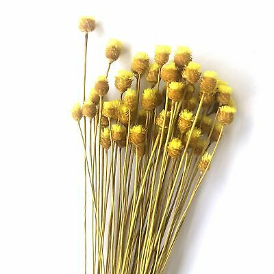 Natural Dry Mini Happy Flower Stems - Yellow