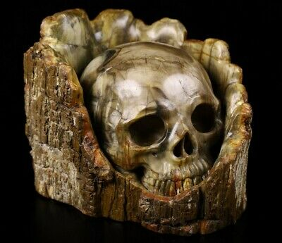"4.2"" PETRIFIED WOOD Carved Crystal Skull Sculpture, Crystal Healing #928"