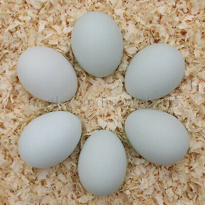 6 x Cream Legbar Hatching Eggs for Incubation (Believed to be Fertile)