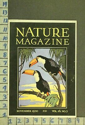 1930 Animal Bird Toucan Jungle Tropical Wildlife Nature Illus Hexom Cover Zr32