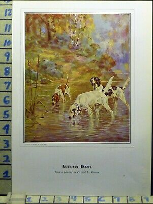 1930 Setter Pointer River Hunting Autumn Breed Canine Dog Vintage Art  Ba64