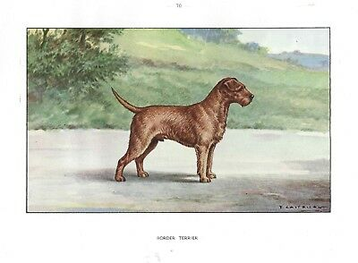 Rare 1930 Art Watercolor Castellan France Dog Portrait Print BORDER TERRIER
