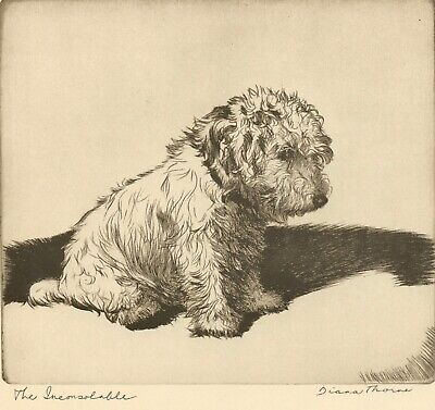 """SEALYHAM DOG by Diana Thorne titled """"THE INCONSOLABLE"""" 1935 Art Print Etching"""