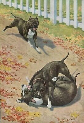 STAFFORDSHIRE TERRIER DOGS IN PLAY Walter A Weber 1958 Art Print