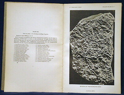 USGS SILURIAN FOSSILS BRYOZOANS from ROCHESTER SHALE, NEW YORK Vintage 1906 RARE