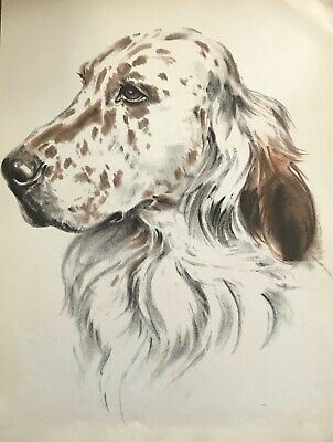 ENGLISH SETTER DOG DRAWING by Diana Thorne 1944 Art Print