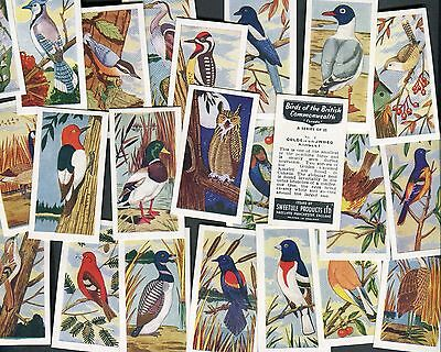 Sweetule 1958 Set Of 25 Birds Of The British Commonwealth Black Back Trade Cards