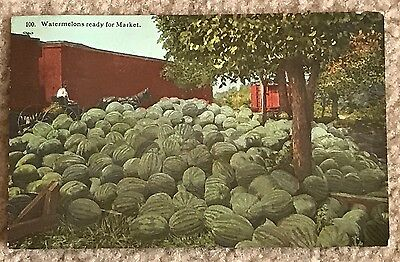 Antique 1914~Watermelons Ready For Market~Photochrom Postcard~TC Co Chicago