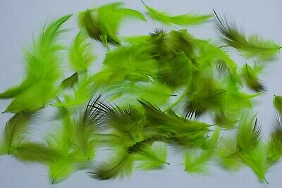 Gordon Griffiths Red Flank Super Selected Feathers approx 100