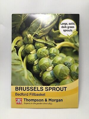 Thompson /& Morgan Easygrow Brussels Sprout Bedford 75 Seeds