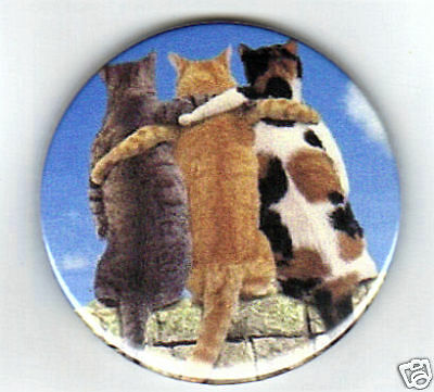 3 Close Cats - Fridge Magnet Or Keyring - Brand New