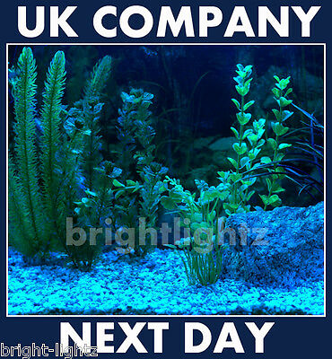 Led Strip Light Set Ip68 Blue Submersible Aquarium Lights Fish Tank Lighting Uk