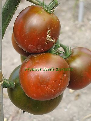 Vegetable Tomato Black Prince 1000 Finest Seeds Bulk