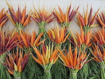 Vegetable  Carrot Rainbow Mix  1500 Finest Seeds