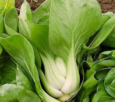 Vegetable  Cabbage Pak Choi White Stem  4 Gram ~ 1600 Seeds