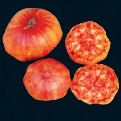 Vegetable Tomato Flame 100 Finest Seeds