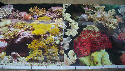 poster fond d aquarium decor eau de mer  60cm x30cm  double face