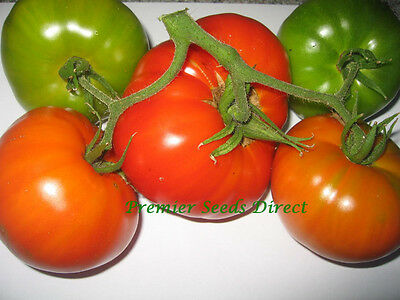 Organic Vegetable Tomato Brandywine Red 500 Seeds Bulk
