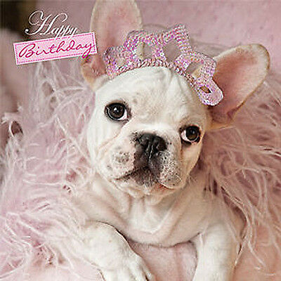 home is where your chihuahua is greeting card Card  birthday 115x170mm