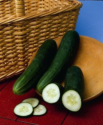Vegetable  Cucumber Perfection  110 Finest Seeds