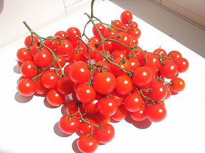 Organic Vegetable Tomato Riesentraube Cherry Variety 50 Seeds