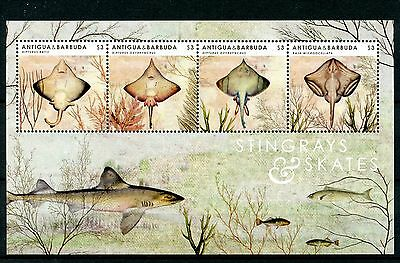 Antigua & Barbuda 2012 MNH Stingrays & Skates 4v M/S Marine Fish Fishes Stamps