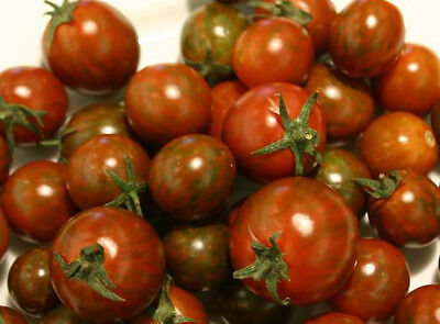 Vegetable Tomato Black Zebra Cherry 75 Finest Seeds