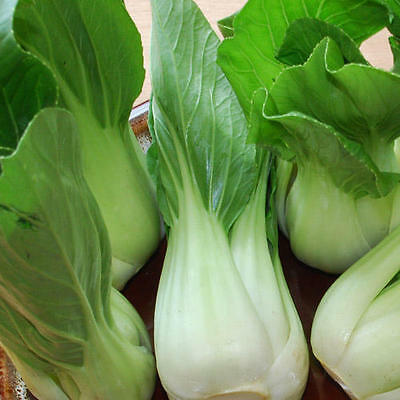 Organic Vegetable  Cabbage Baby Pak Choi White  500 Seeds