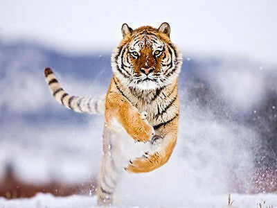 Tiger In The Snow  - Quality Heavyweight  Mouse Mat / Pad #3