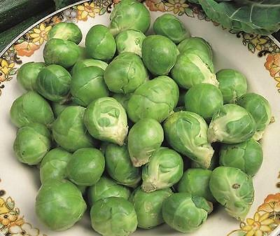 Vegetable  Brussel Sprout Evesham Special  1000 Finest Seeds  ** Free Uk P&p**