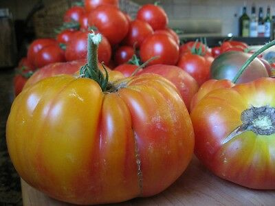 Vegetable Tomato Beefsteak Mr Stripey 100 Finest Seeds