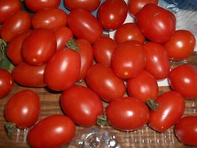 Vegetable Italian Tomato Principe Borghese 200 Seeds