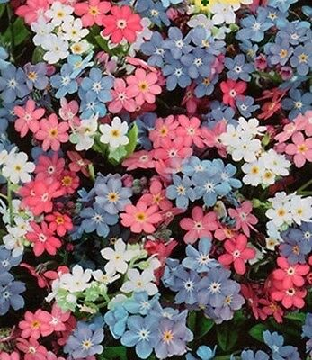 Forget-Me-Not Seeds Hybrids Of White Pink Blue Flowers Easy To Grow