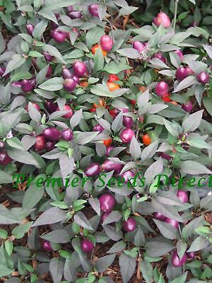 Vegetable  Hot Chilli Pepper Filius Blue  60 Finest Seeds