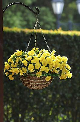 Flower Pansy Trailing Winter Flowering Cool Wave Golden Yellow 20 Seeds